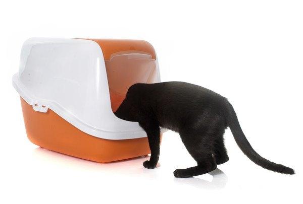 トイレを除く猫