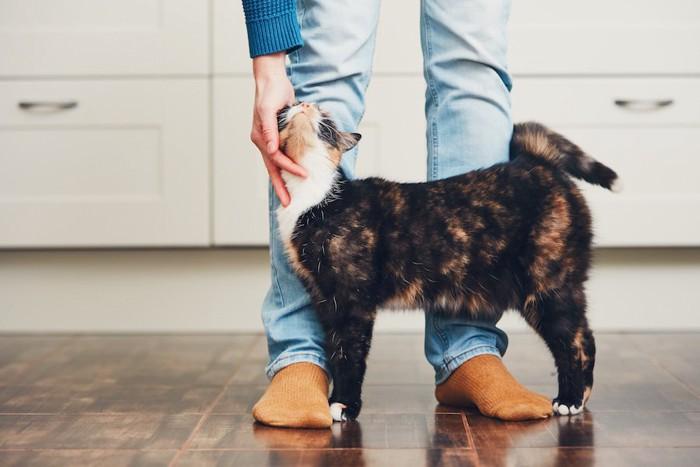 飼い主の足元で撫でられている猫