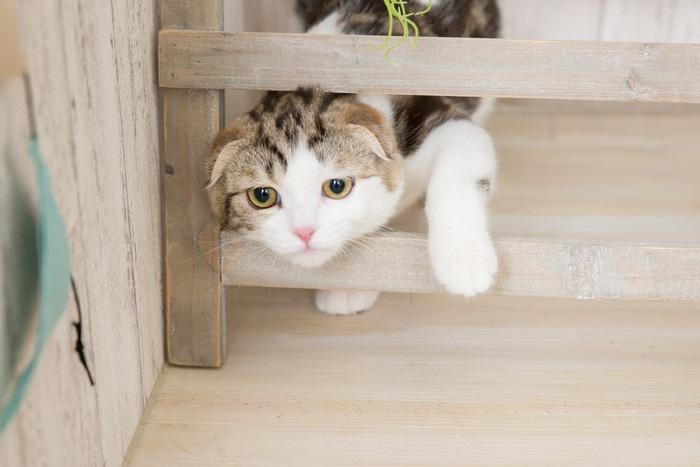 獲物を狙う猫の写真