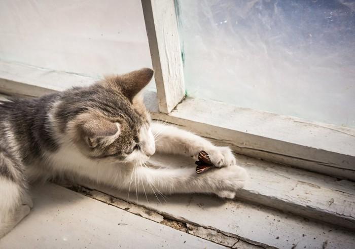 窓辺で虫を捕まえる子猫