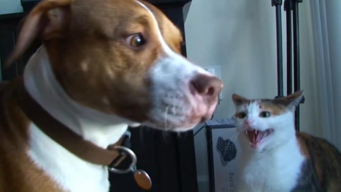 顔色を伺おうとする犬