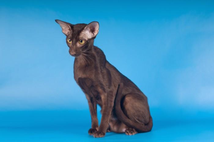 スリムな体型の猫