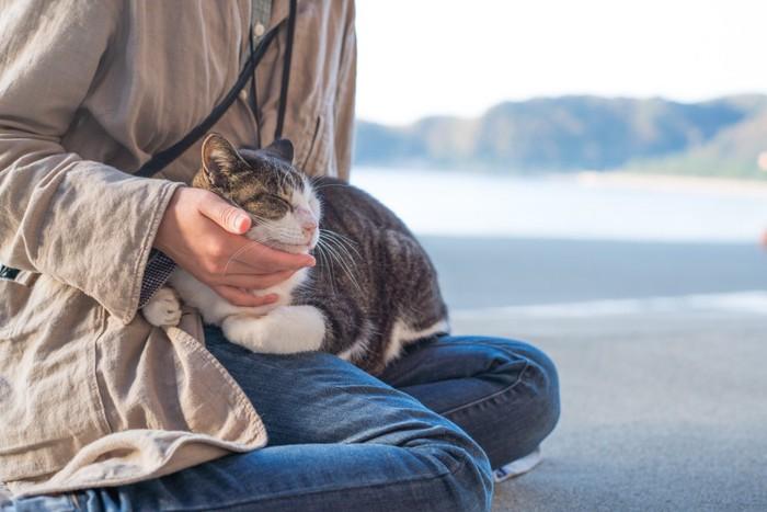 ひざの上で香箱座りをする猫