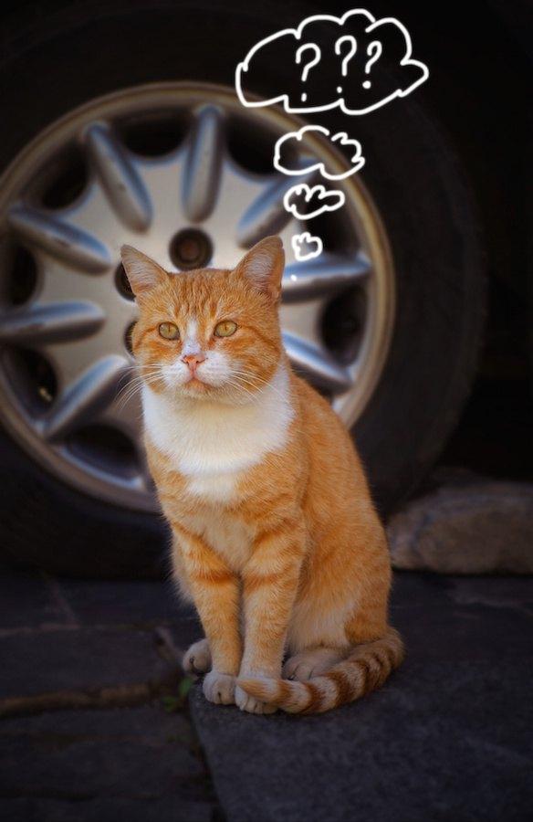 不思議そうに考える猫