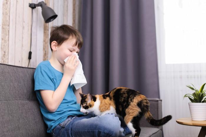 鼻をかむ男の子の膝に乗ろうとする猫