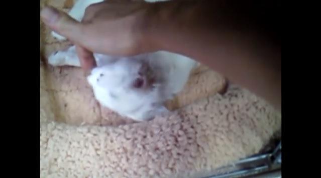 指からごはんを食べる猫