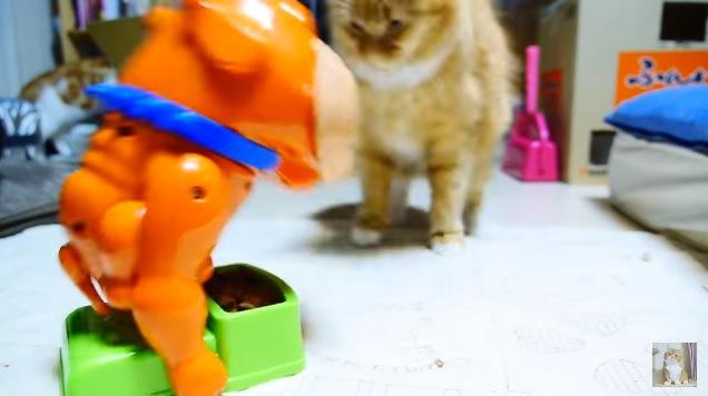 犬に吠えられ驚く猫(前から撮影)