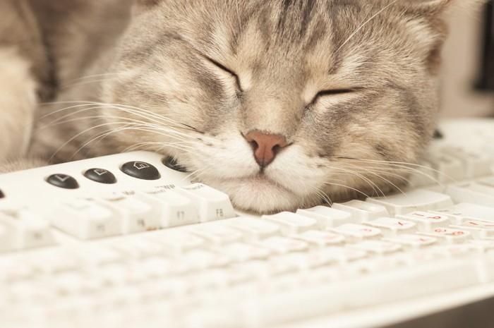 キーボードで寝る猫