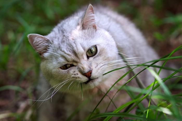 葉っぱをかじる猫