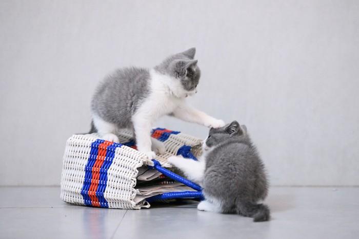 バックの上でじゃれあう二匹の子猫