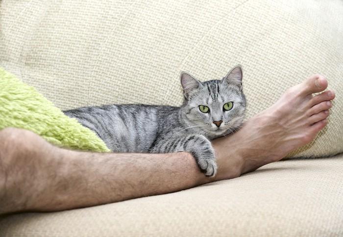 人の足をかかえる猫