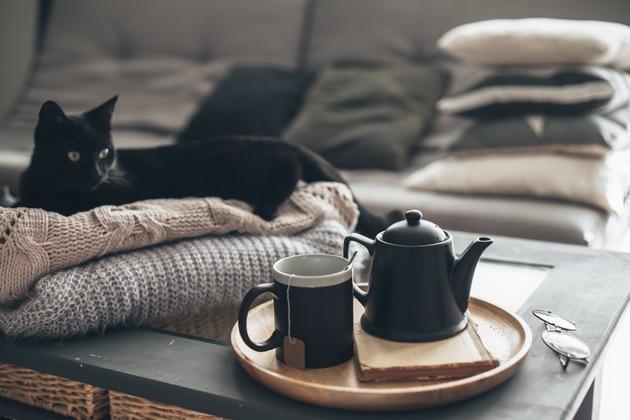 黒猫とコップ