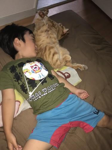 子供と猫が眠る写真