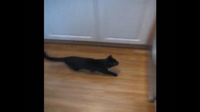 洗濯機に向かう猫