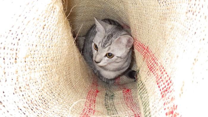 袋の中に入った猫