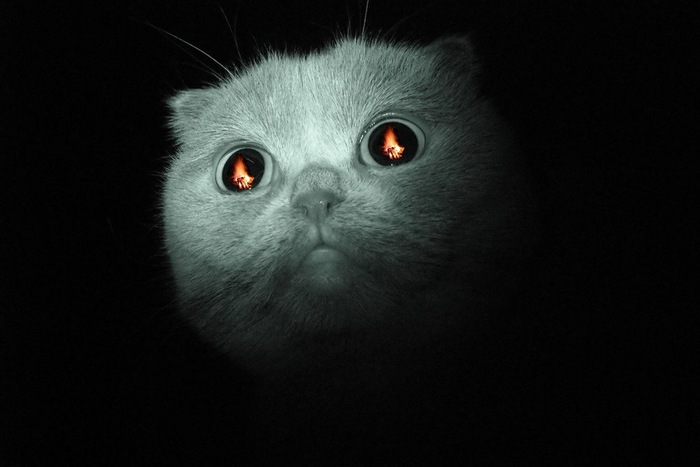 目に炎が映る猫