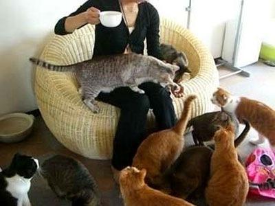 らぶねこの猫たちとくつろぐお客さん