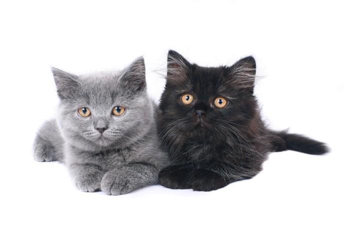 2匹の子猫の写真