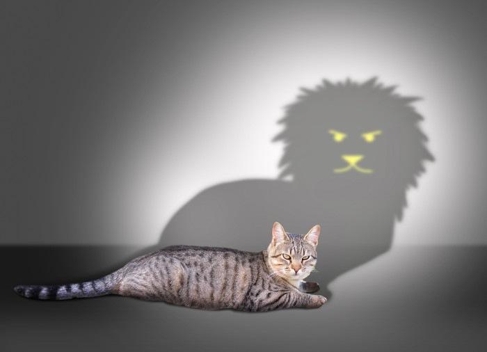 シルエットと猫