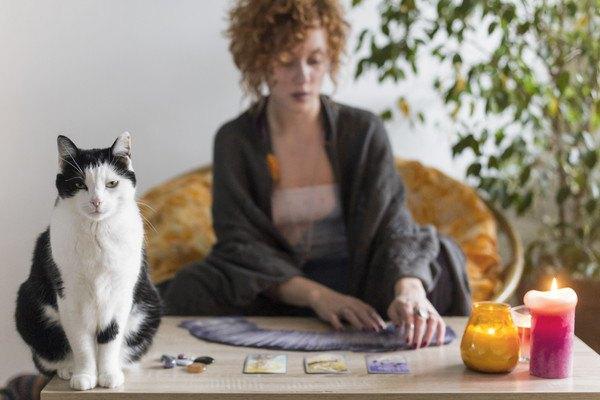 猫とタロットカード