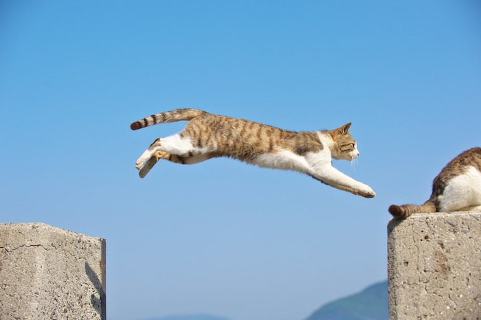 大きくジャンプする身体能力の高い猫と青空