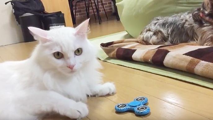 不満そうな顔の白猫