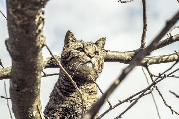 木の上のサバ猫