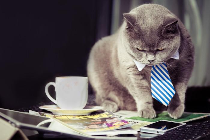コーヒーカップと猫