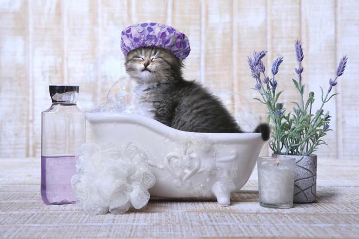 ラベンダーのお風呂に入る猫