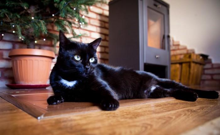 リビングにいる黒猫