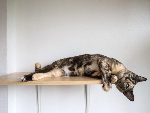 ウォールシェルフと猫