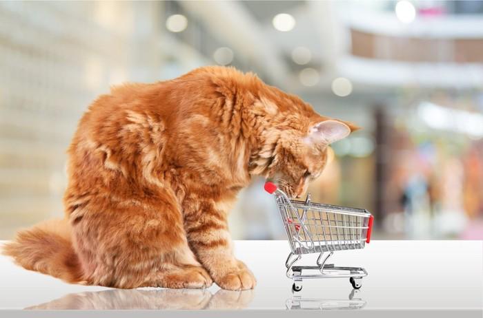 ショッピングカートと猫
