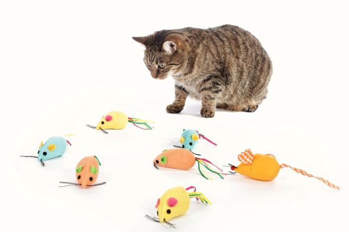 おもちゃを見ている猫