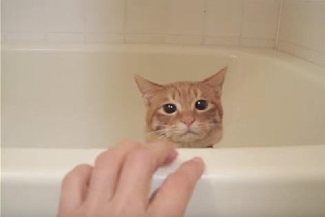 ゆっくり下がる猫