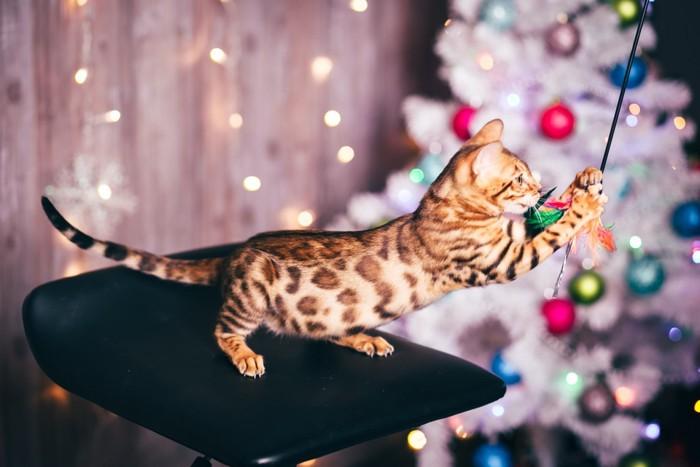 オモチャで遊ぶベンガル猫