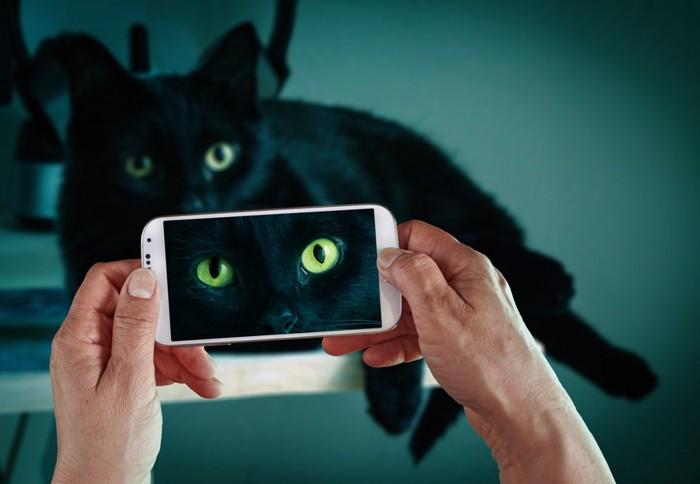 黒猫を撮影