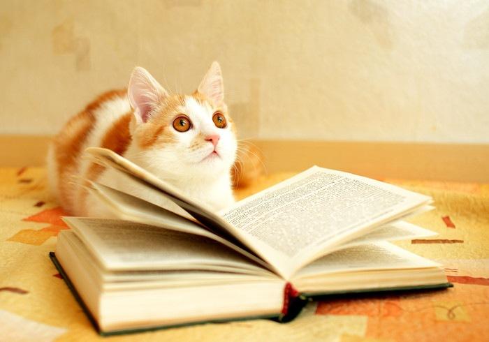 本を見る茶とら猫