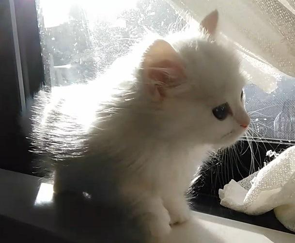 #新雪のような被毛