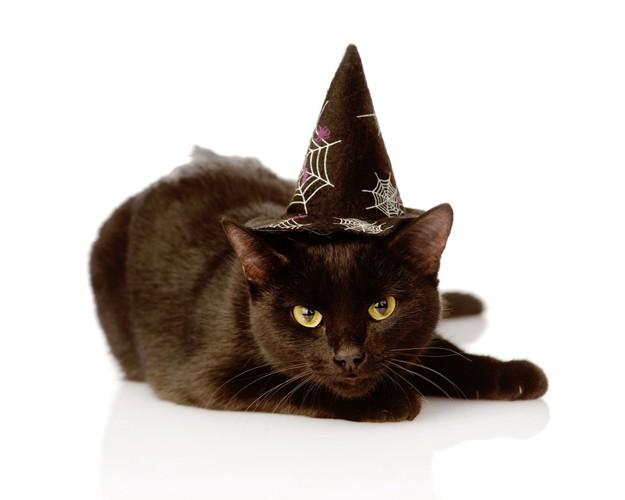ふせる黒猫