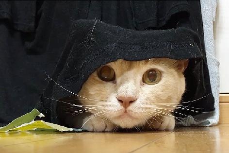 布に隠れながら顔を出す猫