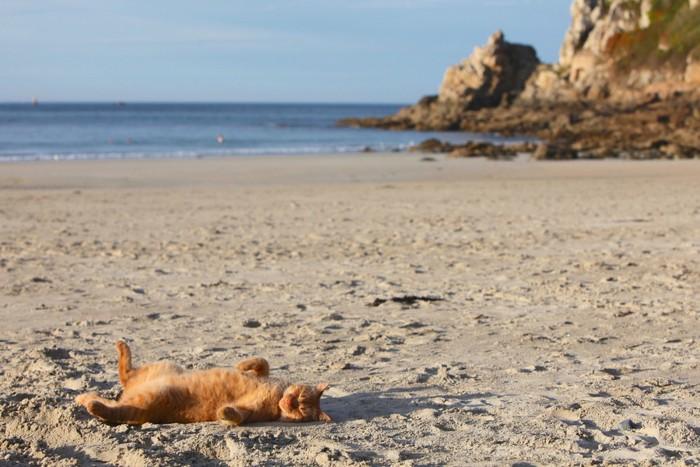 海を歩く猫