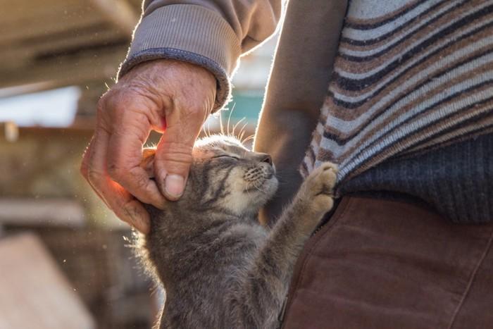 飼い主に抱きつく猫