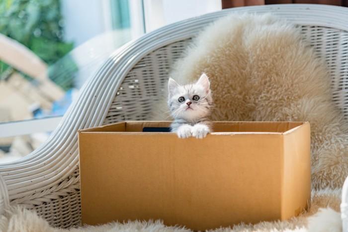 ダンボールから出てきた子猫