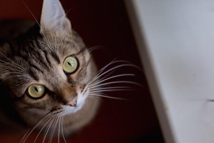 じっとこちらを見上げる猫
