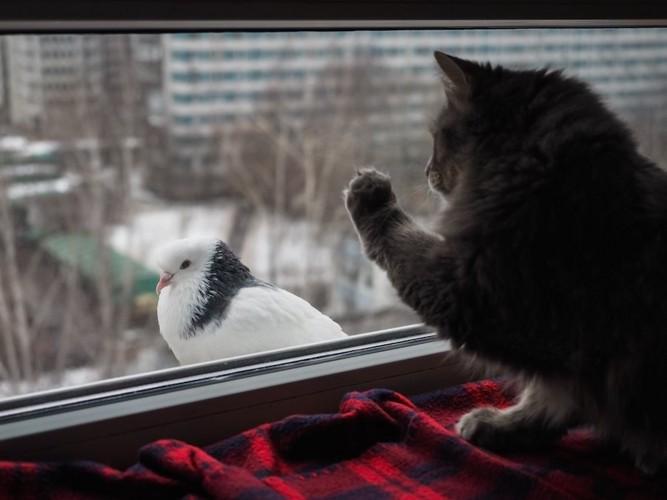 窓の外の鳥を狙う猫