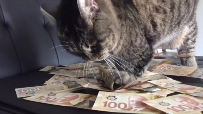 お金をかき集める