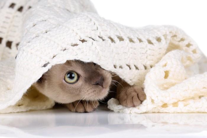ブランケットに隠れる猫