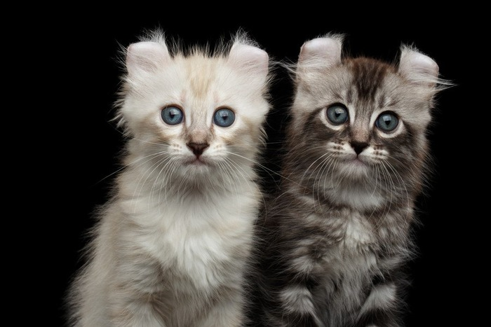 見つめる二匹の猫