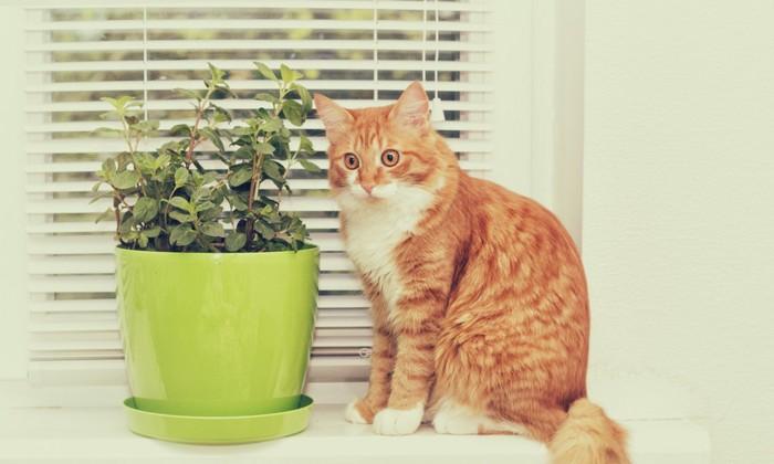 ミントと横向き猫