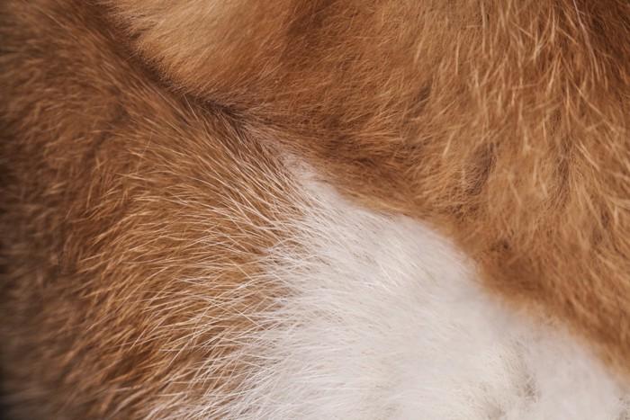 猫の毛のアップ